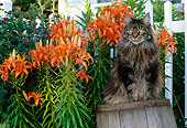 CAT 01 LS0003 01