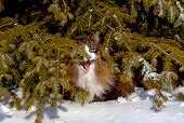 CAT 01 LS0005 01