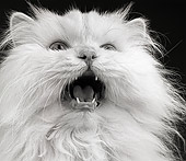 CAT 01 MR0005 01