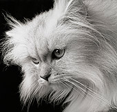 CAT 01 MR0006 01