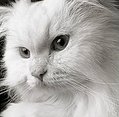 CAT 01 MR0007 01