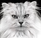 CAT 01 MR0012 01
