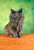 CAT 01 RC0001 01