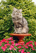 CAT 01 RC0004 01