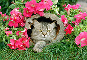 CAT 01 RC0005 01