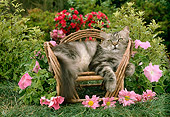 CAT 01 RC0007 01