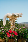 CAT 01 RC0009 01