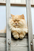CAT 01 RC0015 01