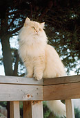 CAT 01 RC0018 01