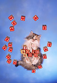 CAT 01 RC0024 01
