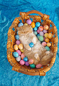 CAT 01 RC0027 01