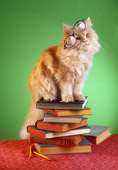 CAT 01 RC0028 01