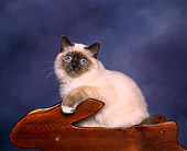 CAT 01 RK0007 01