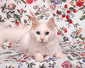 CAT 01 RK0026 01