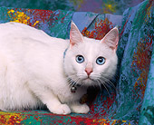 CAT 01 RK0115 02