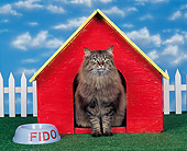 CAT 01 RK0121 02
