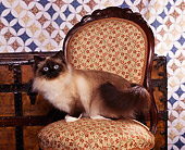 CAT 01 RK0214 02