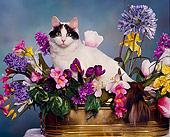 CAT 01 RK0219 03