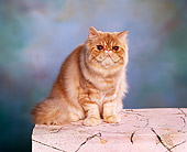 CAT 01 RK0230 04