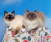 CAT 01 RK0241 01