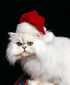 CAT 01 RK0254 02