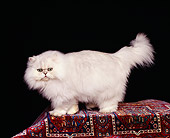 CAT 01 RK0256 03