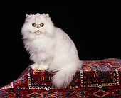 CAT 01 RK0257 04