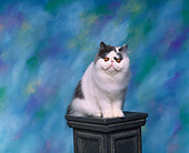 CAT 01 RK0280 02