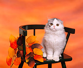 CAT 01 RK0282 01