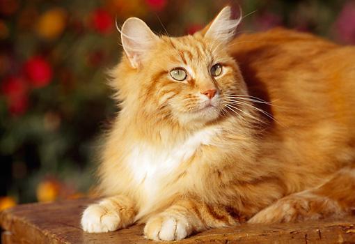 Tabby Cat With Orange Specs