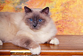 CAT 01 RK0311 01