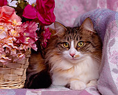CAT 01 RK0315 03