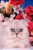 CAT 01 RK0336 11