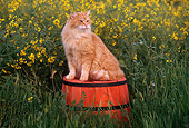 CAT 01 RK0361 02