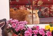 CAT 01 RK0372 01
