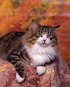 CAT 01 RK0399 01