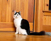 CAT 01 RK0421 03