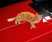 CAT 01 RK0425 01