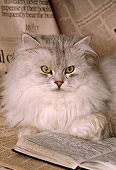 CAT 01 RK0445 03