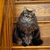 CAT 01 RK0466 06