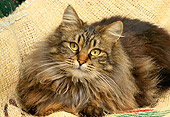 CAT 01 RK0472 07