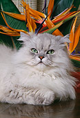 CAT 01 RK0484 04
