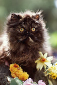 CAT 01 RK0496 01