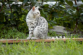 CAT 02 AB0002 01