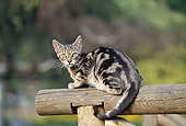 CAT 02 AB0007 01