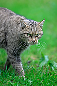 CAT 02 AC0004 01