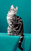 CAT 02 CH0006 01