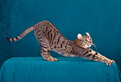 CAT 02 CH0007 01