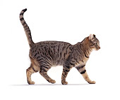 CAT 02 CH0008 01