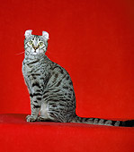 CAT 02 CH0010 01